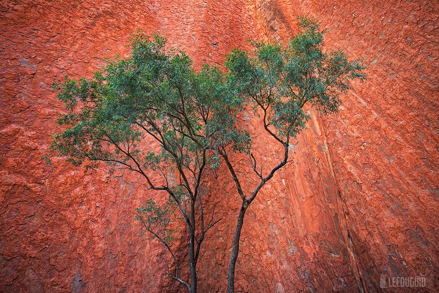 Kantju-Gorge-Uluru-Kata-Tjuta-National-Park-Australia-04130953